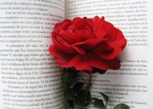 Rose_pencil_write_244520_l