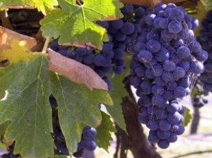 Wine_242085_l