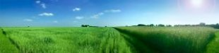 Panorama_field_grass_248149_l