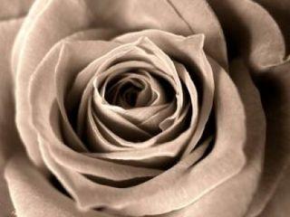 Rose_dark_death_220937_l